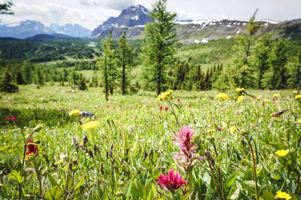 Healy Pass, Banff National Park